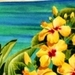 Flowers - hawaii icon