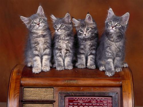 Kitten karatasi la kupamba ukuta (1024x768)