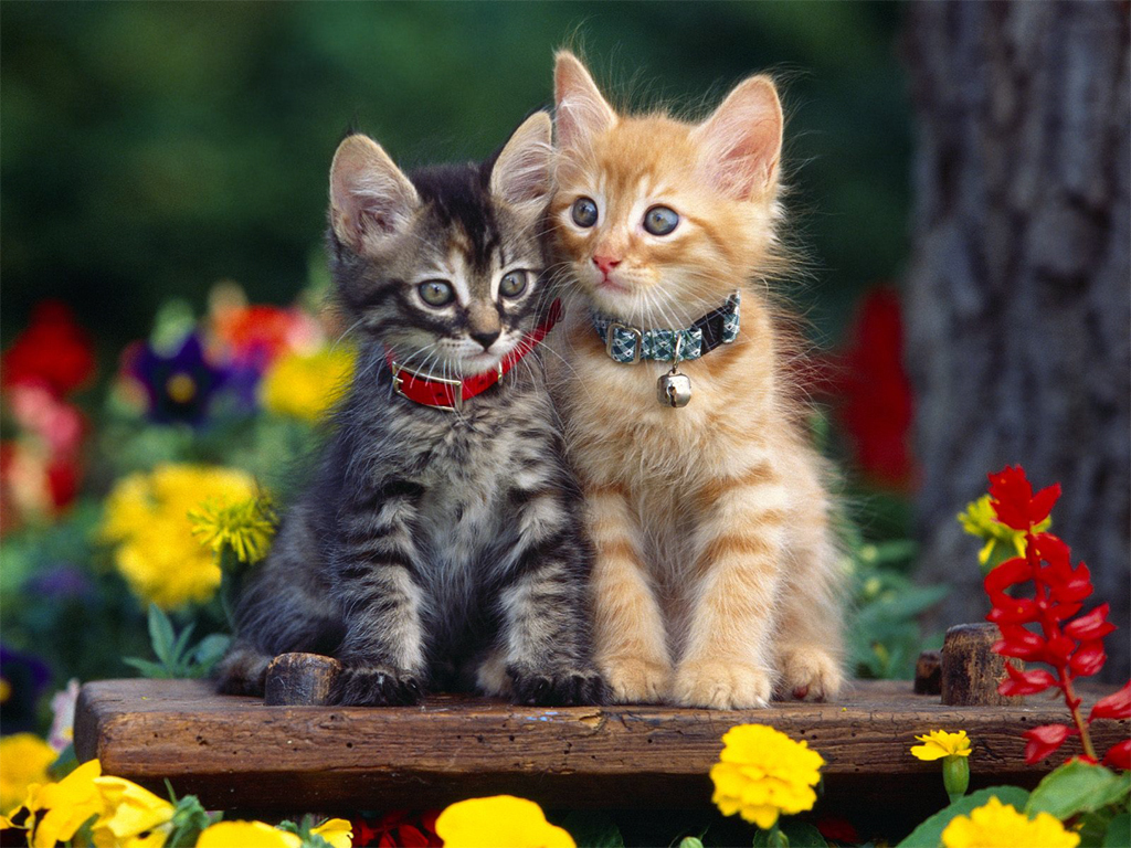 Cats images Kitten Wallpaper (1024x768) HD wallpaper and background photos