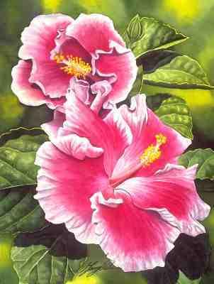 rosa Hibiscus