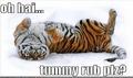 Pyshimars tiger form: LOLZ! :D