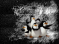 The Penguins of Madagascar...wallpaper!! lol!! - penguins-of-madagascar wallpaper