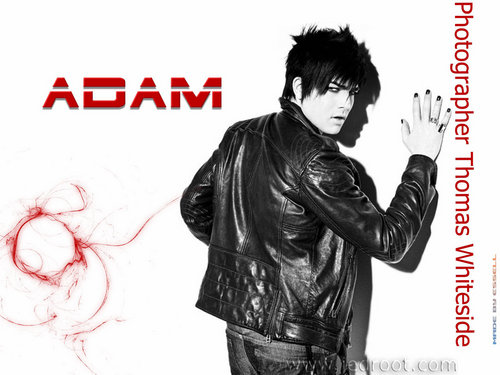 Adam Jed Root karatasi la kupamba ukuta