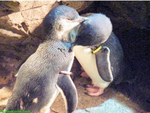 Cute and cuddly little penguins