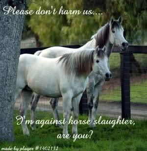 against horse slaughter Horse slaughter horse slaughter although people for horse slaughter may argue its humane and not wrong to put a horse through slaughter, most people against slaughter will.