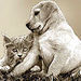 Forever Friends ! - dogs icon