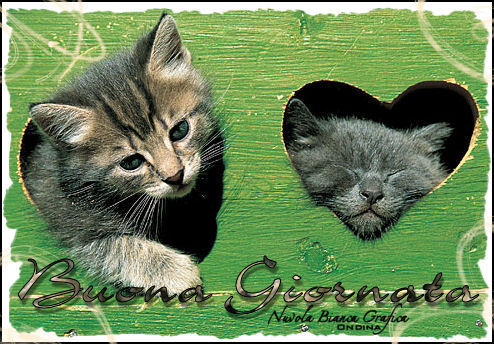 Great dia to all from gatos