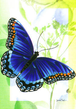 Butterflies wallpaper entitled Pretty