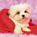 So Cute ! - dogs icon