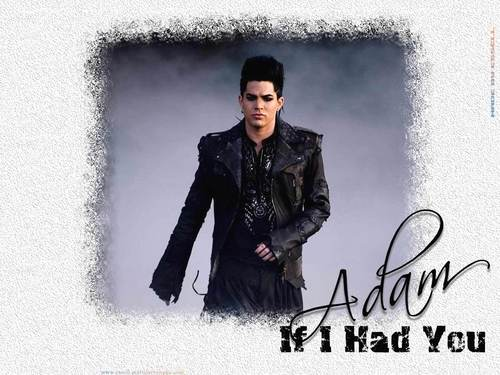 Adam- If I Had You wolpeyper