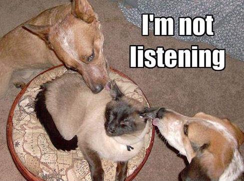 LOL...Dogs !