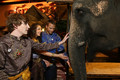 kyle & an elephant  - kyle-gallner photo
