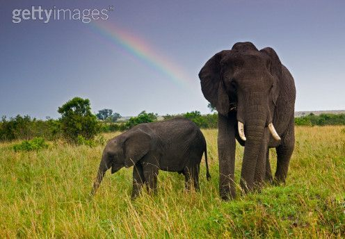 rainbow elephant - elephants Photo