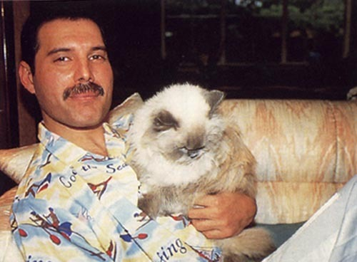 Freddie Mercury With A Cat