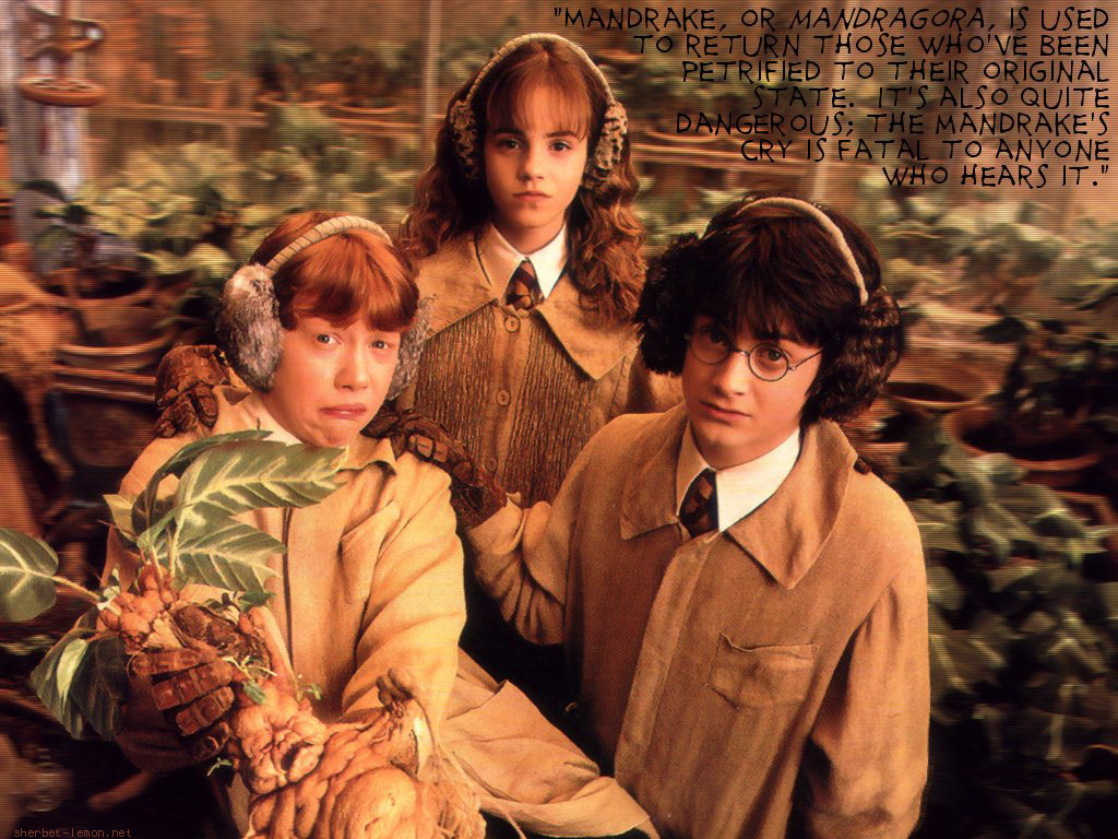 http://images2.fanpop.com/image/photos/12500000/Harry-Potter-3-harry-potter-12528873-1024-768.jpg