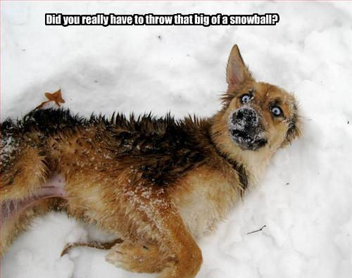 LOL !! DOGS !