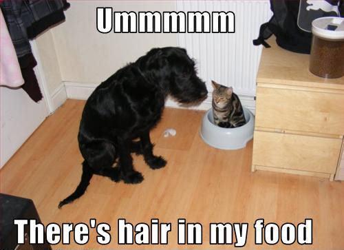 LOL !! 개 !