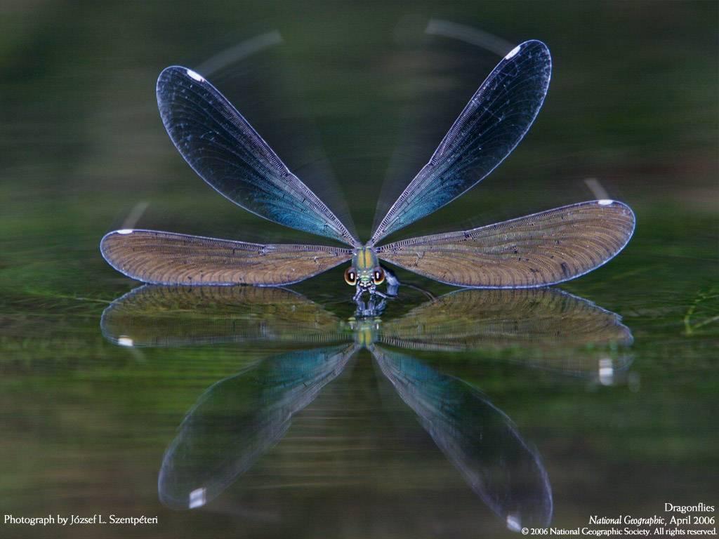 National Geographic các bức ảnh