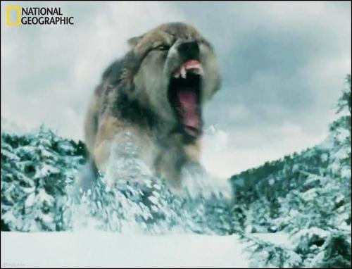 go werewolf ! xd