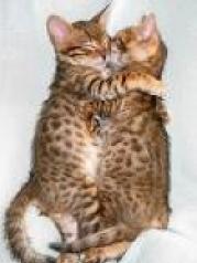 Kissing Kittys