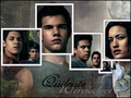 Wolf pack-Eclipse - twilight-series photo