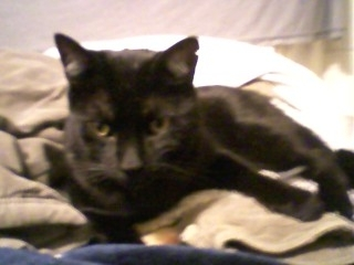 submarelime's BigBoy Kitty