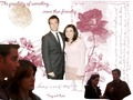 ncis - tony and kate wallie wallpaper