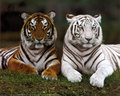 animais of the Rainforest