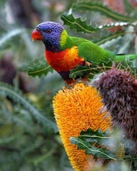 God's beautifully colored bird