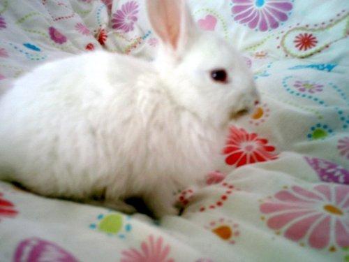 """My Rabbit""""Inci"""""""