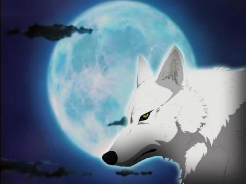 Wolfs Rain Photo 12797526