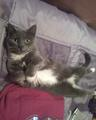 my cat babes (: