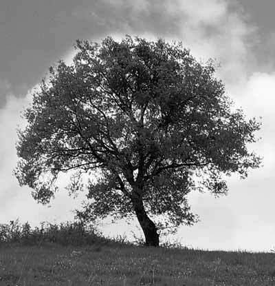 木, ツリー
