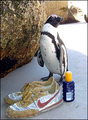 Do These Shoes Fit Me? - penguins photo