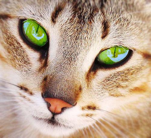 For My Friend Lily a profil Feline