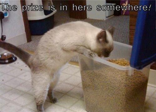 Lol...Cats !!