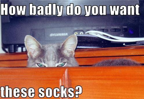 Lol....Cats !!