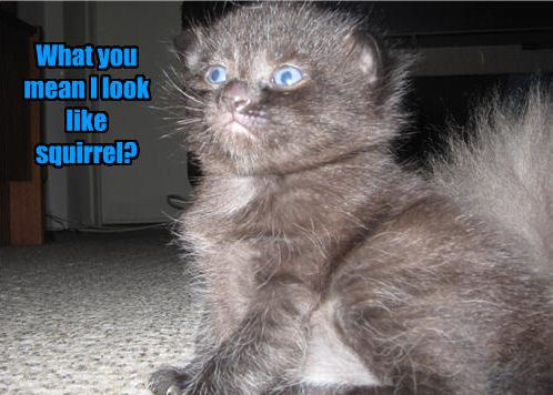 Lol.....Cats !!