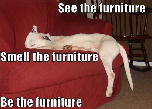 Lol........Dogs !!
