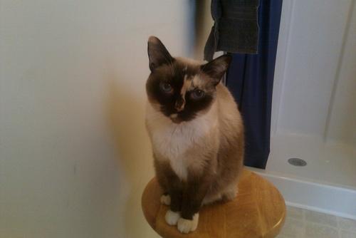 My cat Coco