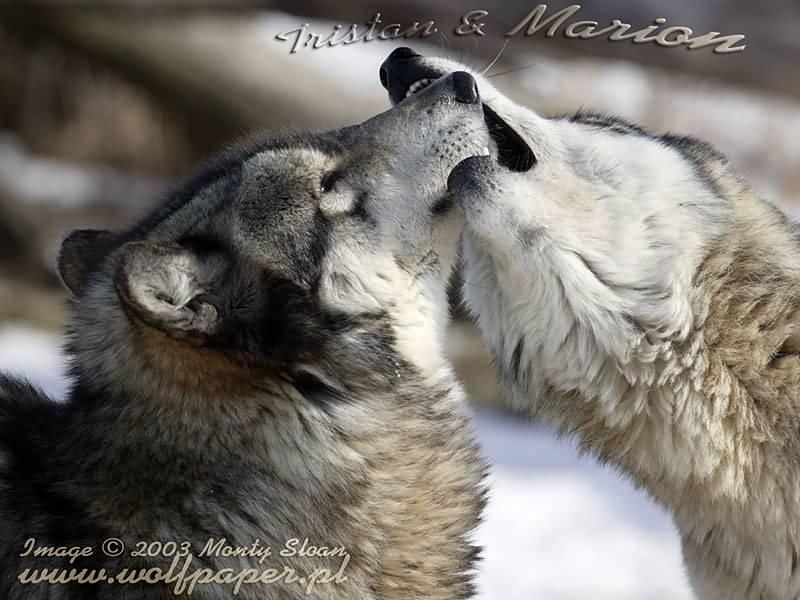 Wolves world