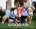 Cougar Town - cougar-town wallpaper