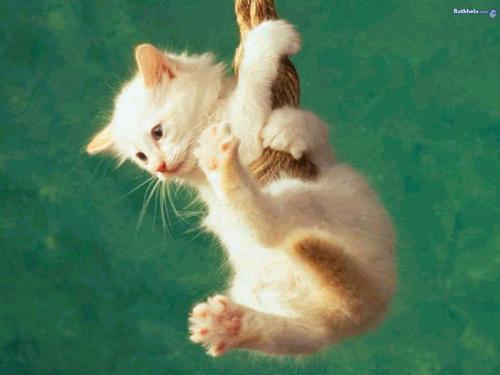Cats wallpaper entitled Cute Cat