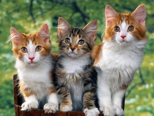 귀여운 고양이들