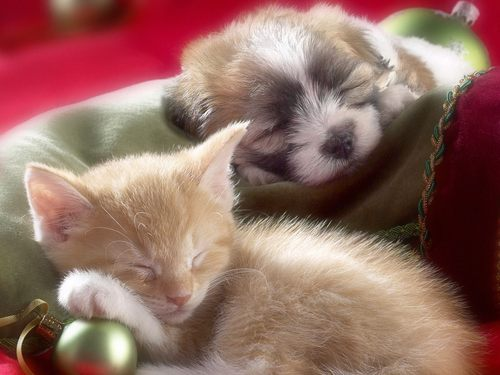 Kitten and Puppy - kittens Wallpaper