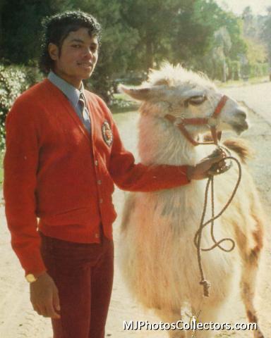 MJ's pets