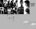 Nick Wallpaper - the-jonas-brothers wallpaper