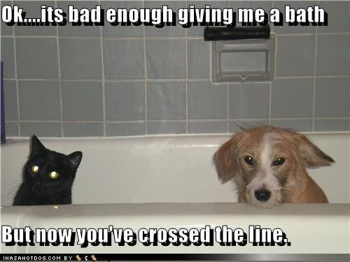 lol.......dogs !
