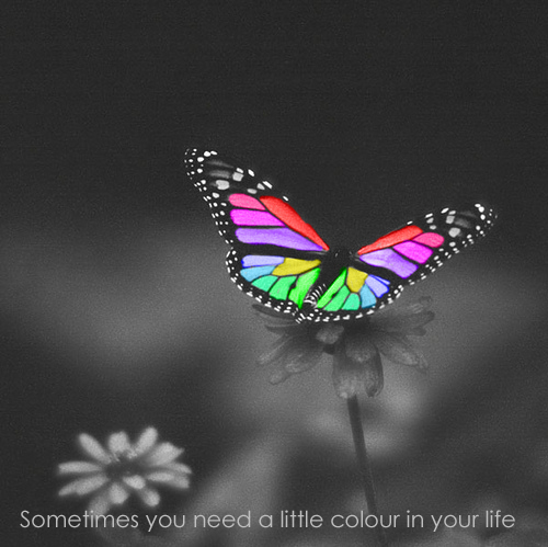 Butterflies wallpaper titled Colourful