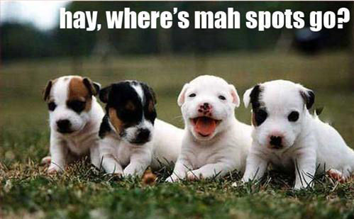 Puppies wallpaper entitled Funny Puppy !